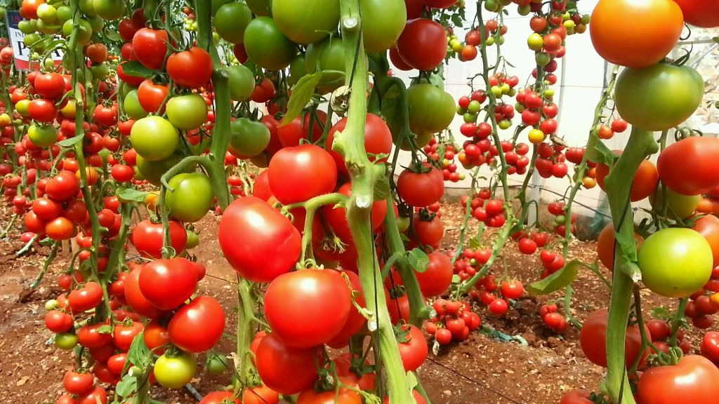 ARTAL Agronutrientes recibe la visita de su distribuidor libanés