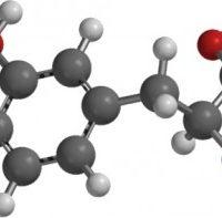 Aminoácidos: Informe Técnico