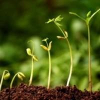 Fertilizantes foliares: Análisis en profundidad de sus componentes y uso
