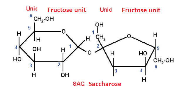 Sucrose structure, a type of polysaccharide.