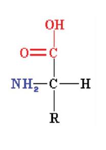 Aminoácidos - ARTAL
