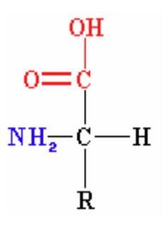 Amino acids seaweed extract - Artal