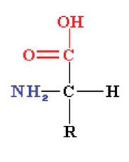 Amino acid carboxylic group VEGEAMINO - Artal