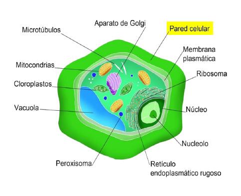 Boro pared celular - Artal