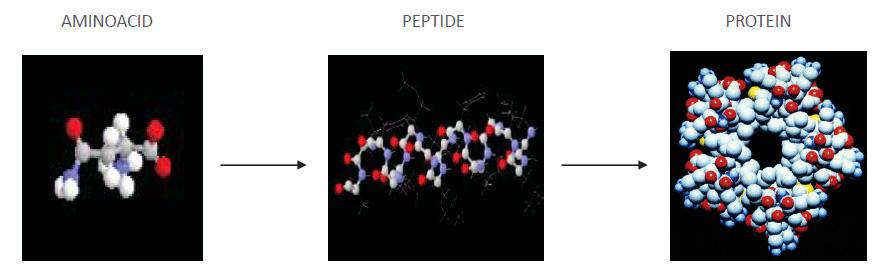 Amino acid peptide chain VEGEAMINO - Artal