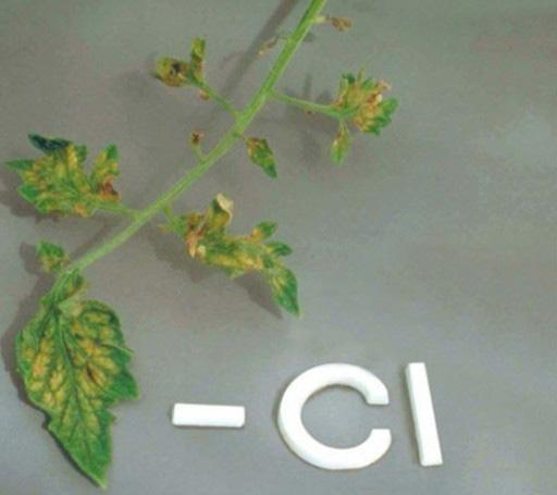Chlorine (Cl) deficiencies in plants