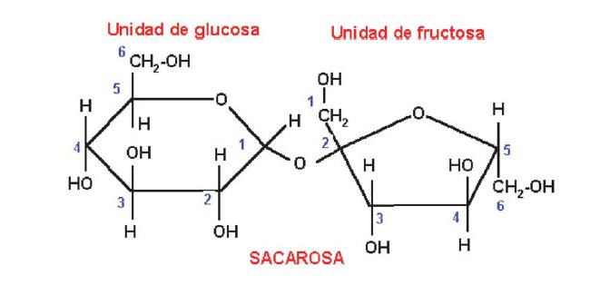 Estructura de la Sacarosa, un polisacárido típico de la fruta.
