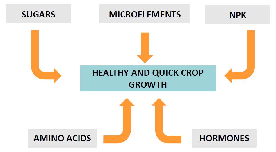 Metabolism Seaweed extract - Artal