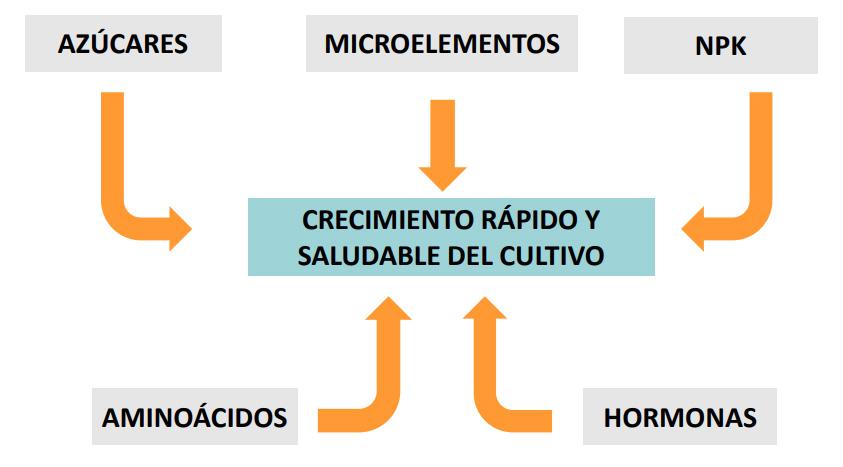 metabolismo Extracto de algas - Artal