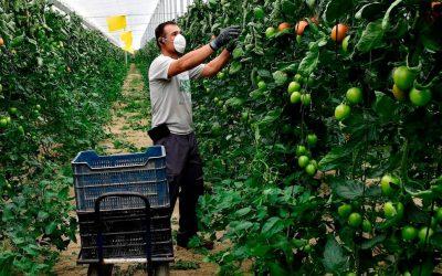 ARTAL Smart Agriculture participa en una colecta de AEFA para suministrar mascarillas a los trabajadores del campo