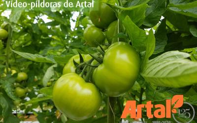 ARTAL Smart Agriculture estrena un canal de Youtube con vídeo-píldoras divulgativas