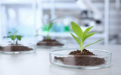 ARTAL Smart Agriculture presenta la Inmunoterapia Vegetal